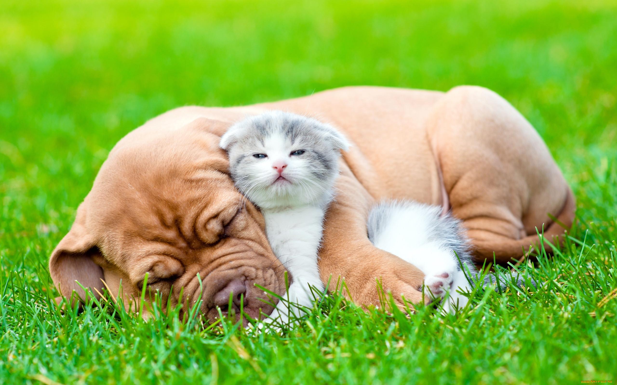 Картинки на рабочий стол котята и щенки